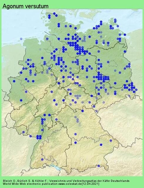 Verbreitungskarte aus Deutschland von Agonum versutum Sturm, 1824