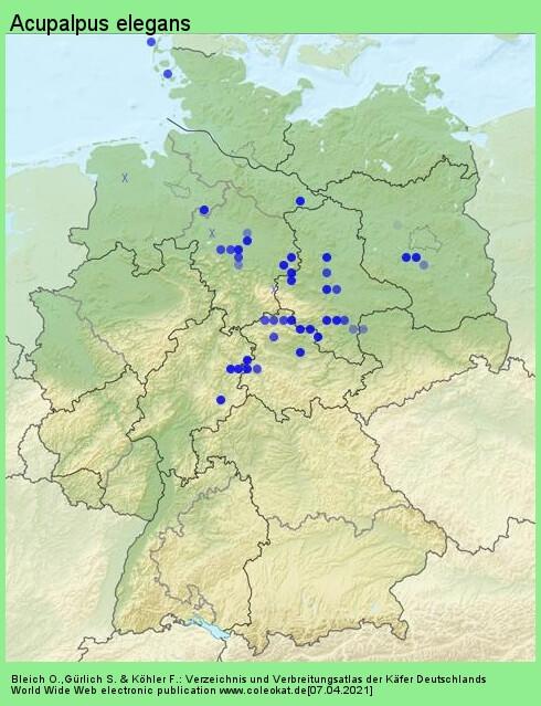 Verbreitungskarte aus Deutschland von Acupalpus elegans (Dejean, 1829)