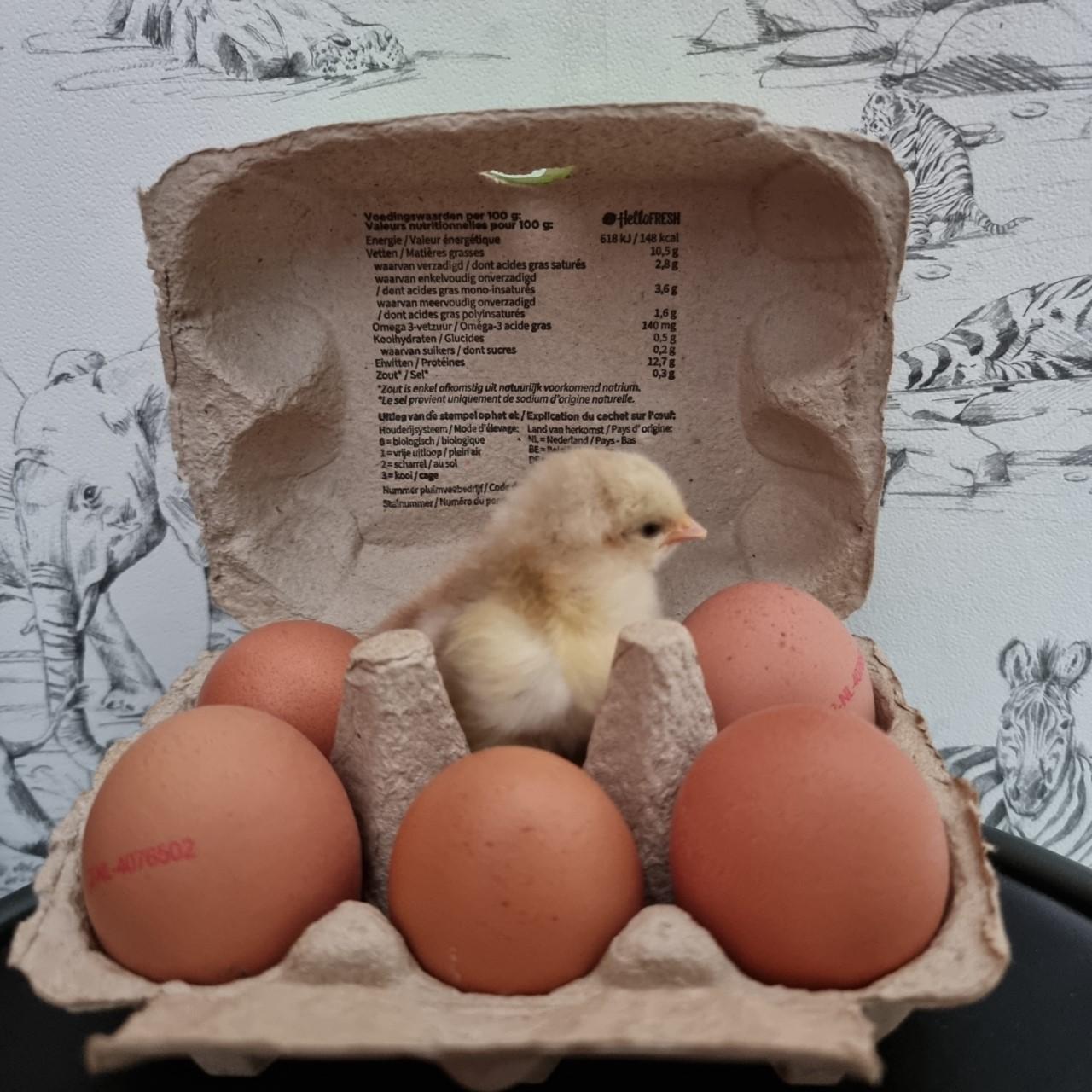 Zo kwam ik van mijn angst voor kippen af.