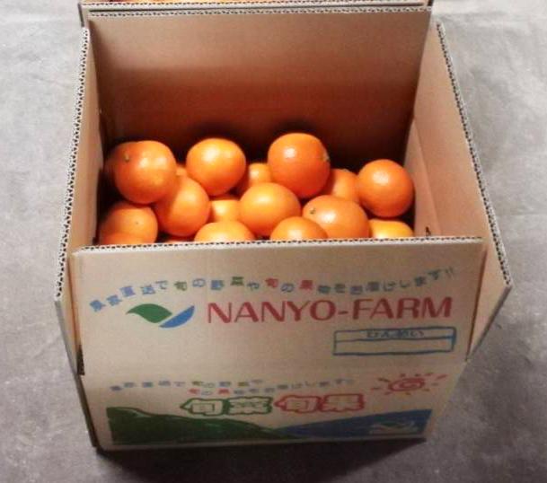 紅マドンナ年内最終出荷と年明け収穫のお知らせ