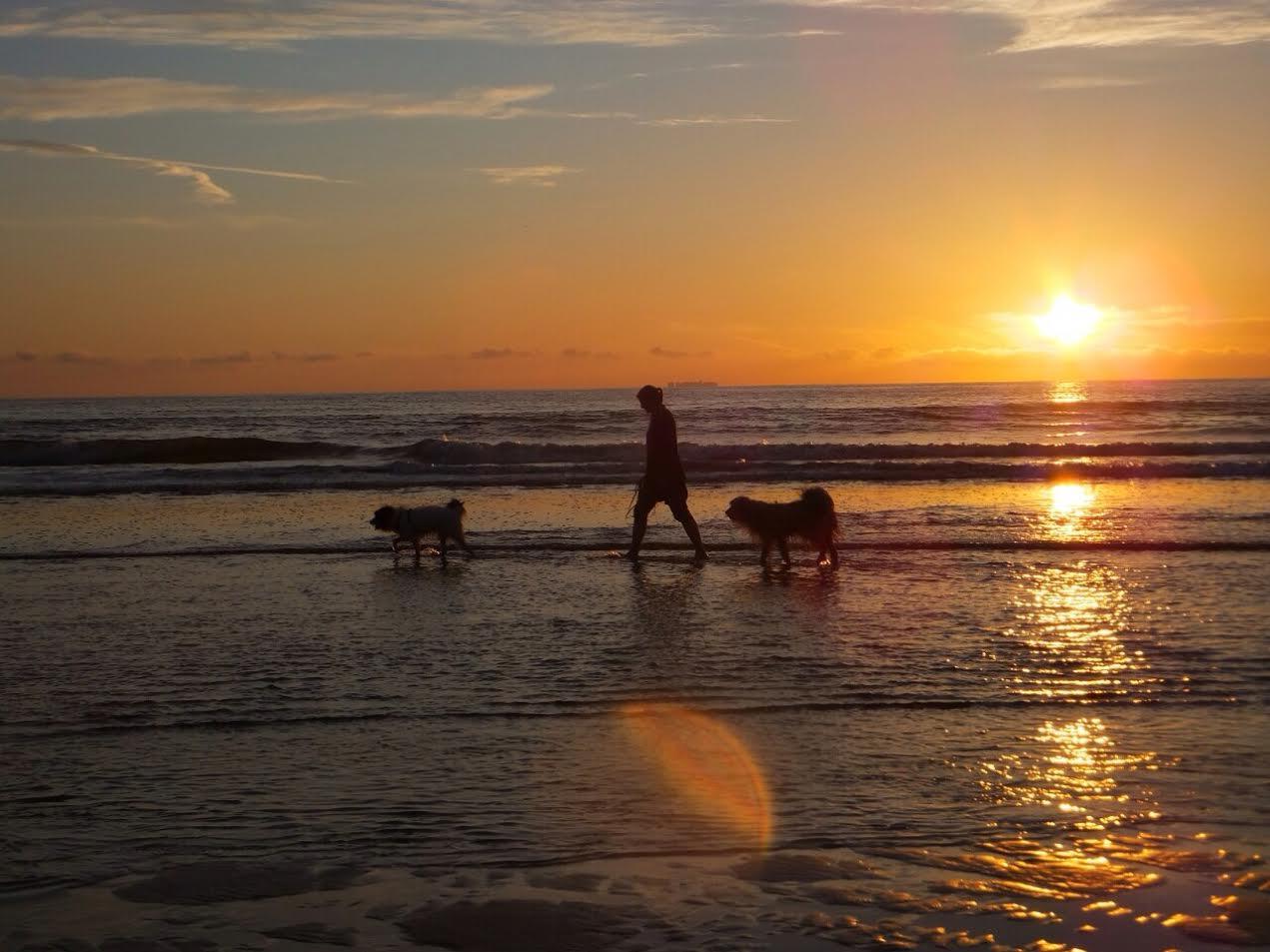 Die Hundeschule macht Ferien vom 19.07.-10.08.21