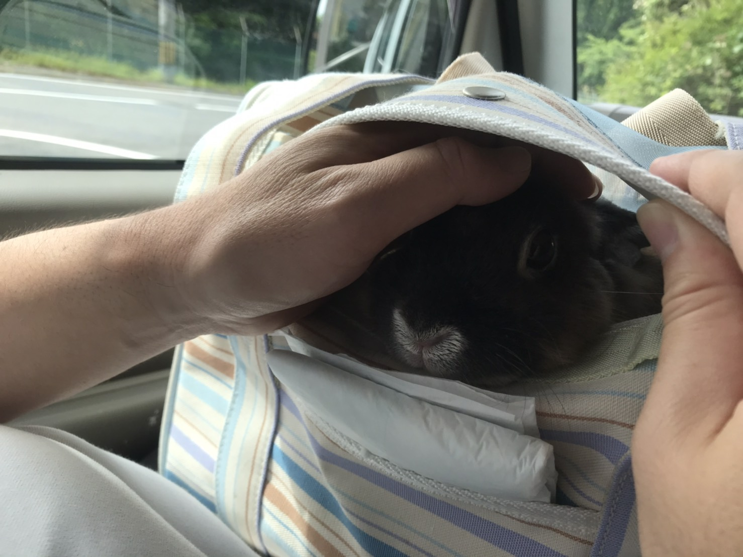 初めて動物病院に行きました。