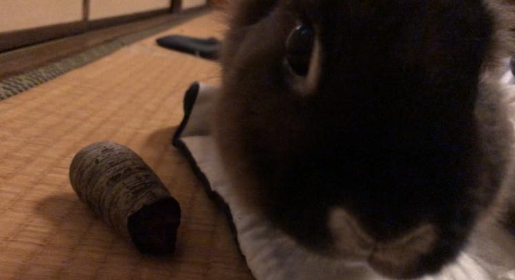 黒ニンジンが好きなポッポちん。