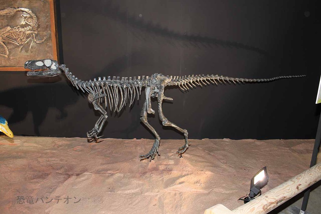 ヘルレラサウルス全身骨格