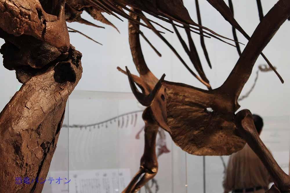 新発見部位①叉骨。首の付け根にある、ブーメラン状の骨です。