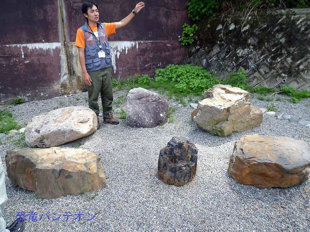 珪化木ほか桑島層産の岩石