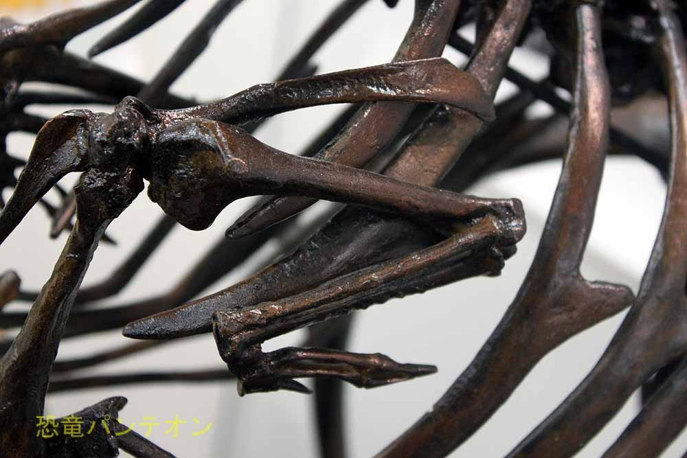 パレオサイエンス ドードー骨格レプリカ前肢