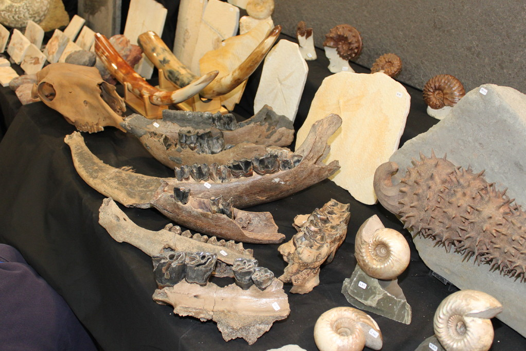 Peter Pittmann Fossilien 哺乳類の顎もあります。