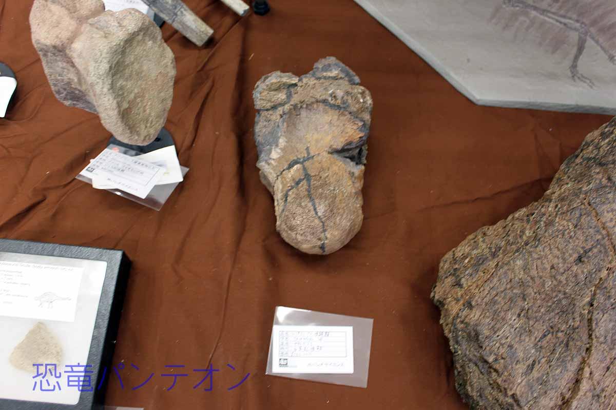 サウスダコタ州産トリケラトプス後頭顆、同州産トリケラトプス鼻角