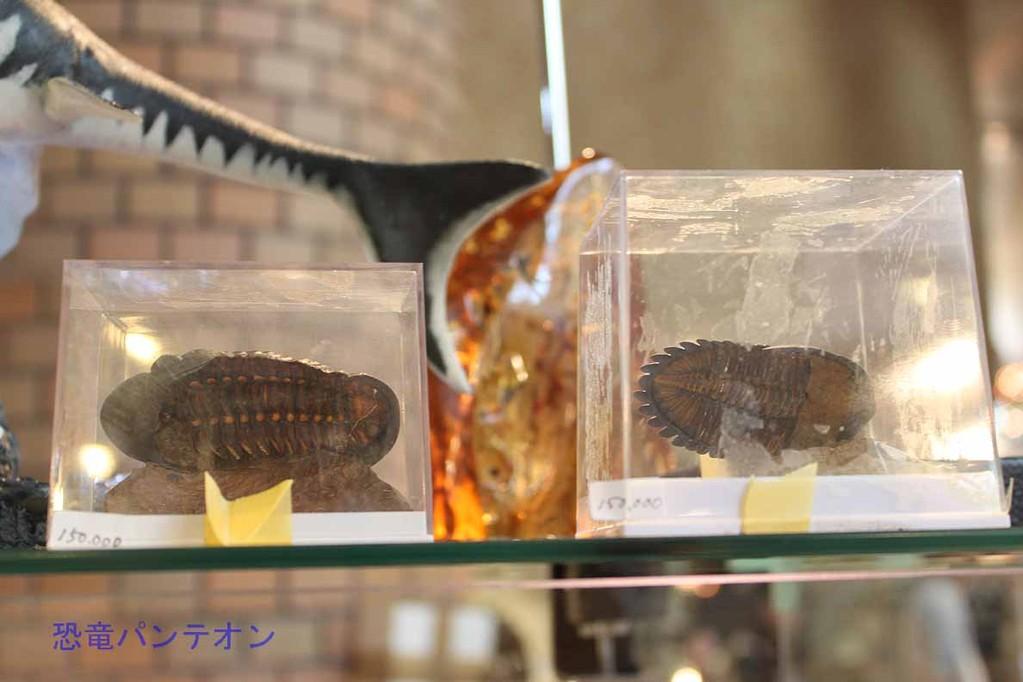 Mijo-Fossils 両側ともクリーニングされた三葉虫
