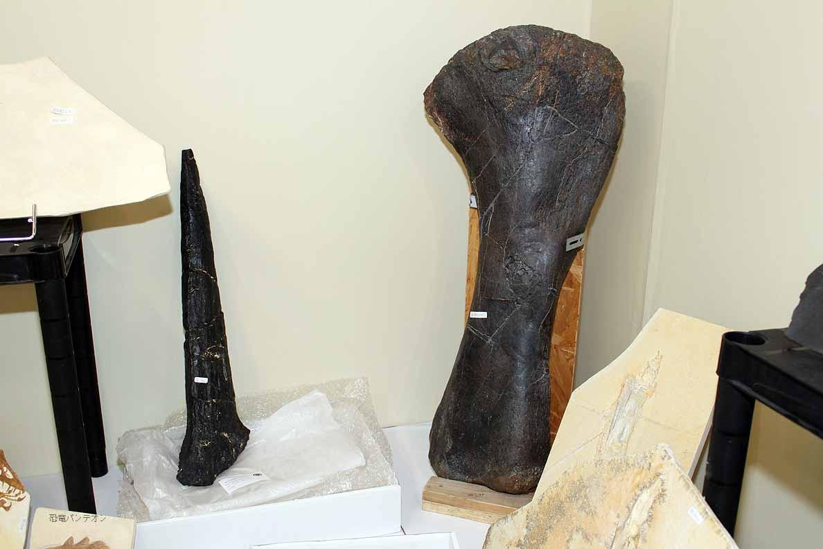 Krautworst Fossils 左側はステゴサウルスの棘。右は聞くの忘れました。