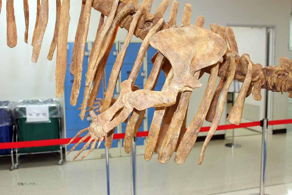 バシロサウルス前肢