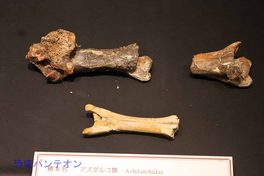 アズダルコ類(翼竜類・実物化石)