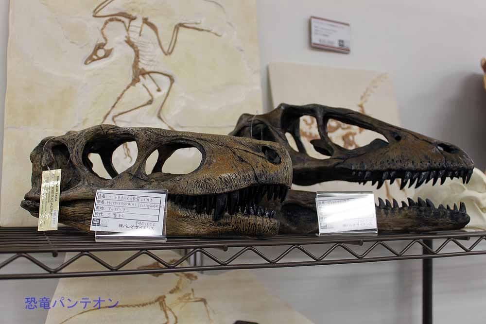 ヘルレラサウルス頭骨レプリカ4万円