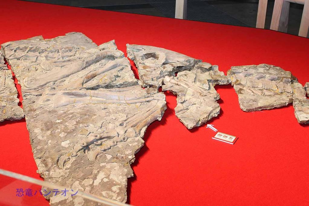 ユティランヌス・フアリの左側、副模式標本