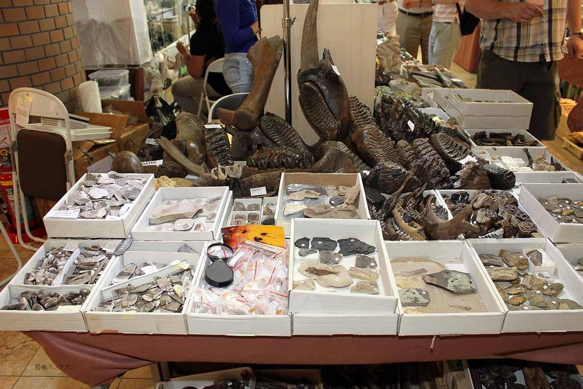 Mijo-Fossils 51,52 ポーランドのお店です。マンモスの歯が目立ちます。