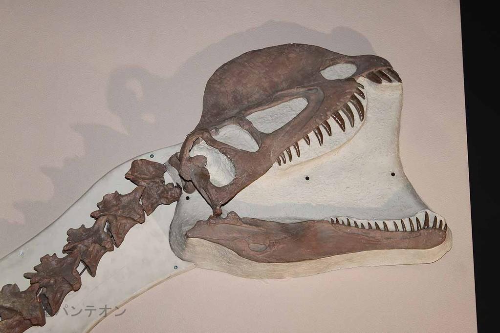 ディロフォサウルス頭部