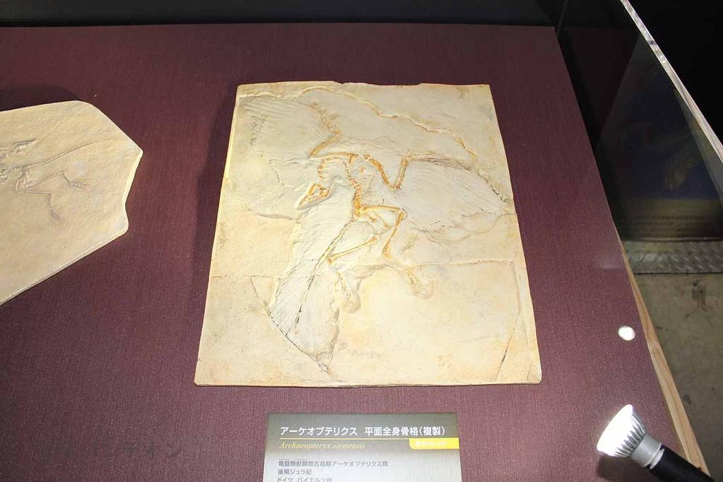 アーケオプテリクス ベルリン標本