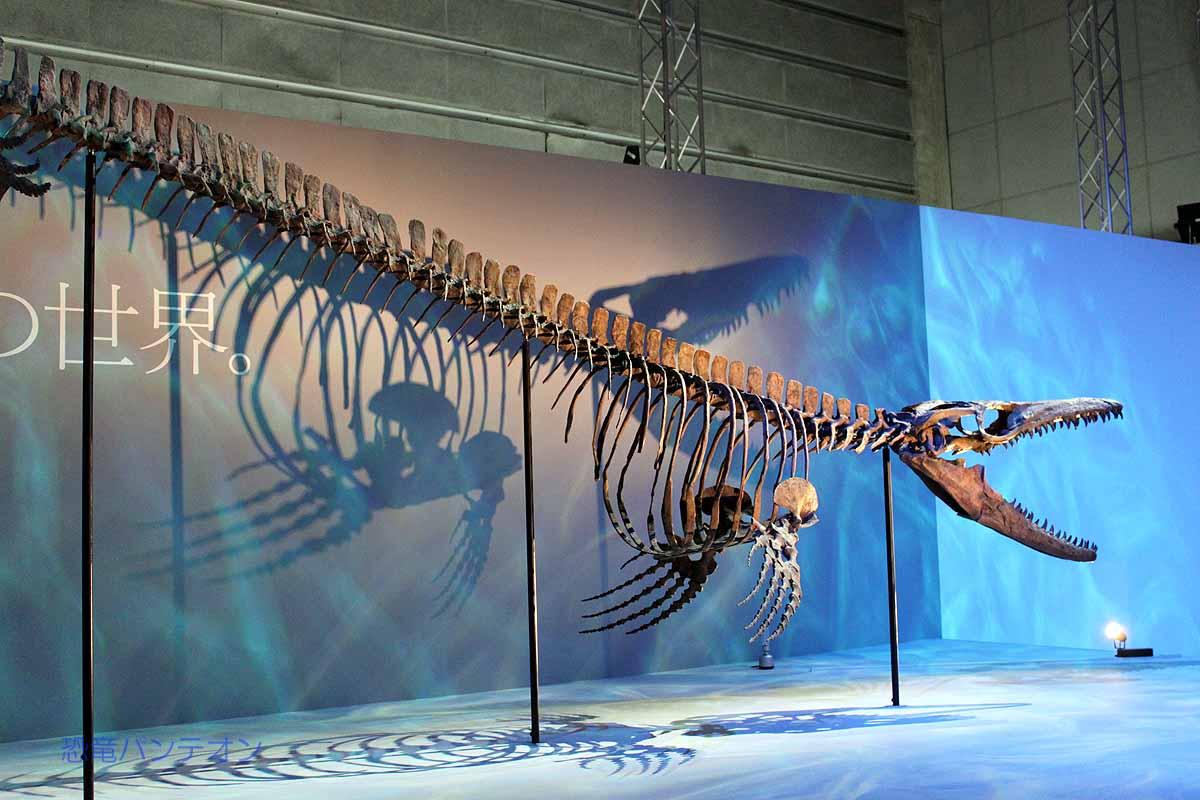 モササウルス 種未定