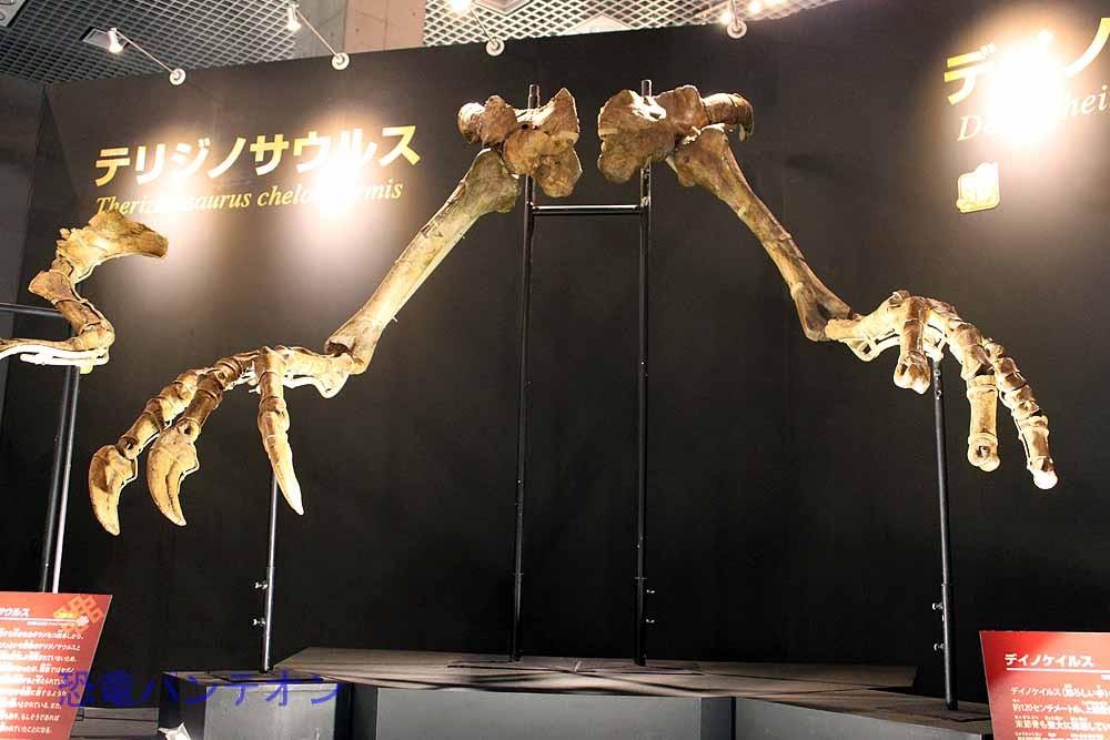 デイノケイルス(実物化石) これは必見!こんな大きな前肢をもつダチョウ恐竜って・・・