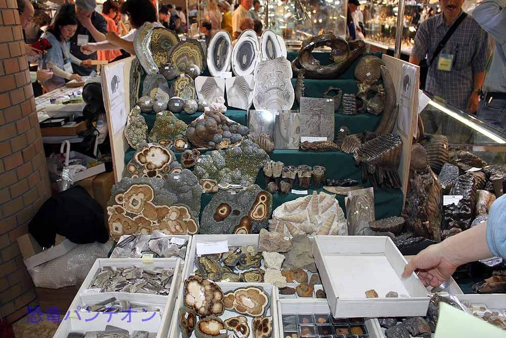 Mijo-Fossils ポーランドの店。ミネラルもあるが、哺乳類化石がメイン。