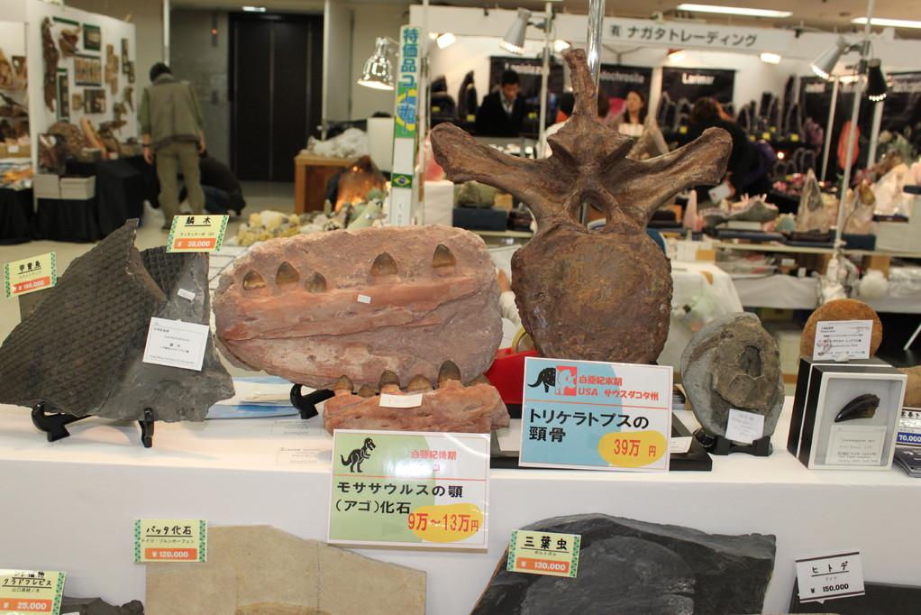 ㈲大江理工社 トリケラトプスの頸骨など。