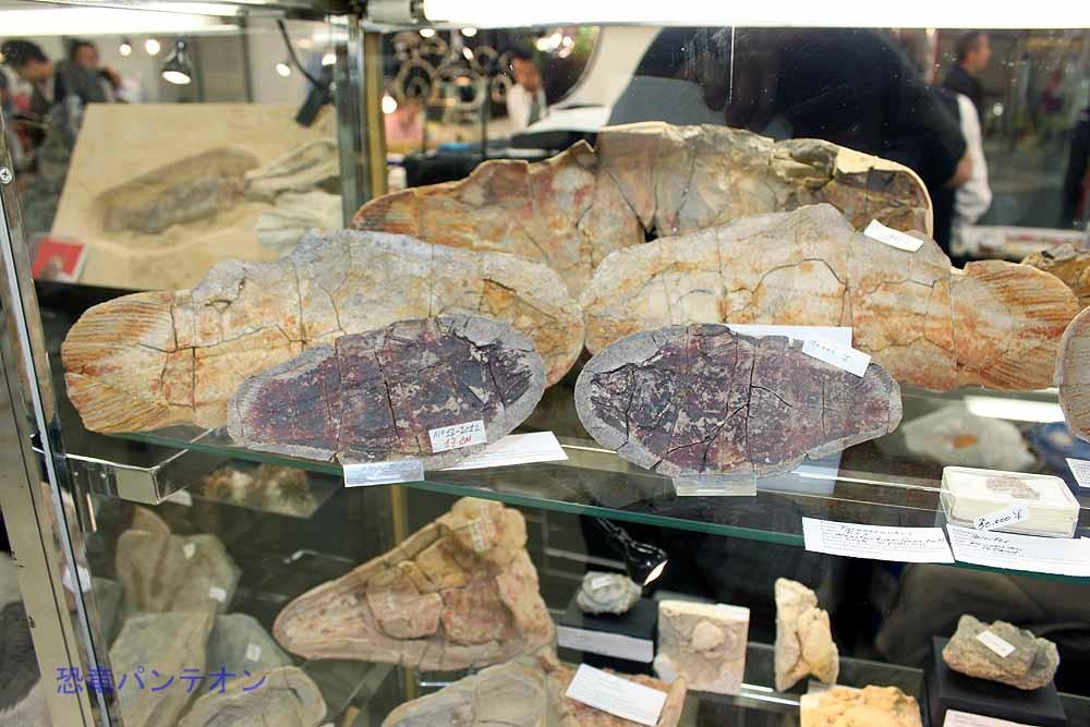 いろいろ面白い化石をいっぱい持ってきています。
