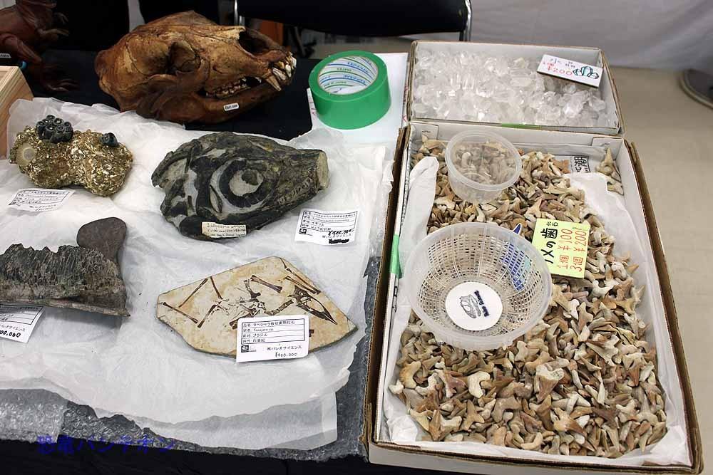 右はサメの歯、左には高級化石