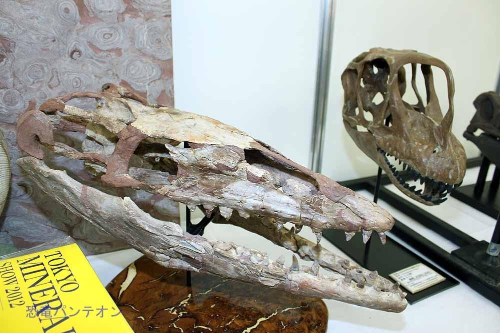 奥にあるのはエウロパサウルス頭骨レプリカ35万円