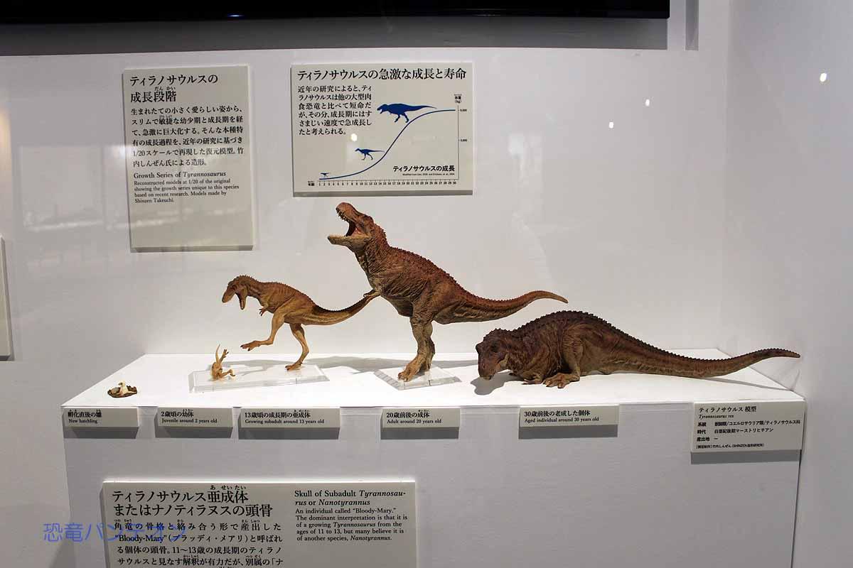 ティラノサウルスの成長段階を表すフィギュア。竹内しんぜんさん製作。