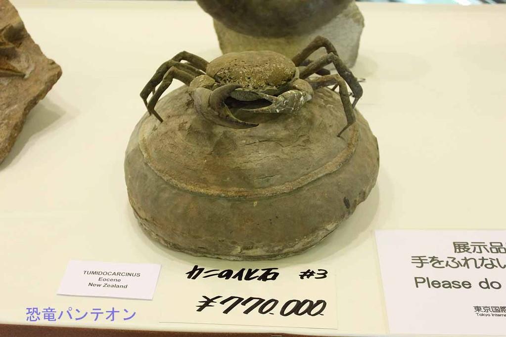 第二会場 カニの化石 77万円