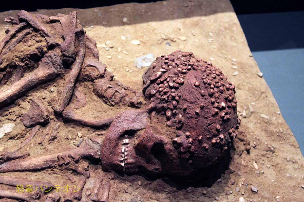 クロマニョン人埋葬人骨 レプリカ 頭部 個人所蔵