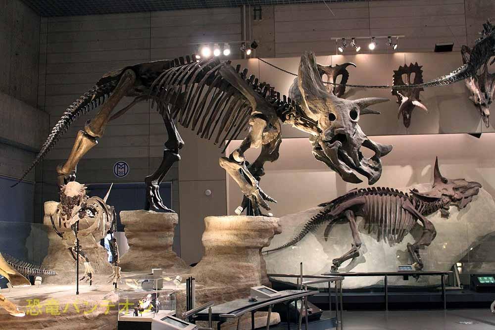 手前のトリケラトプス骨格と左下のパキケファロサウルスは新展示です。