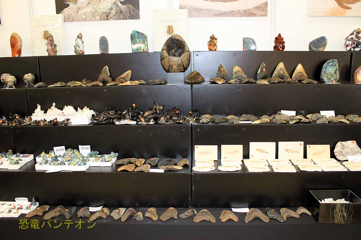 St.Petersburg Paleontological Laboratory ロシアから三葉虫やアンモナイトなど