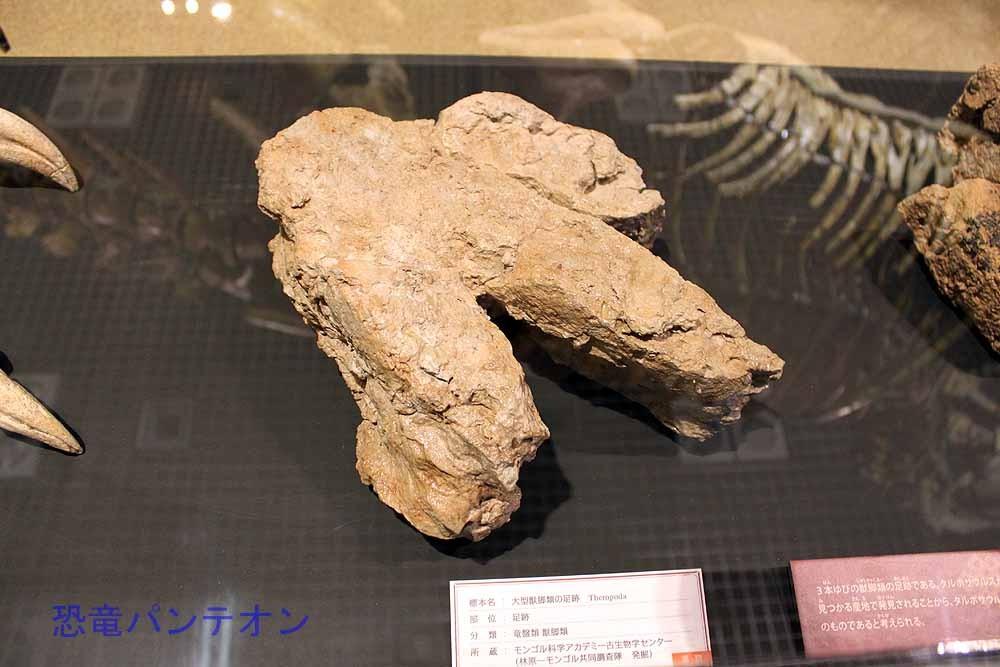大型獣脚類足跡 タルボサウルスのものと考えられています