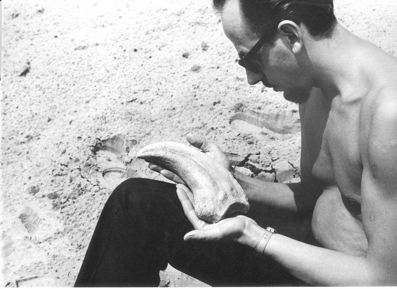 デイノケイルス 発掘現場 (1965年)MPC-D100/018, Institute of Paleobiology PAS