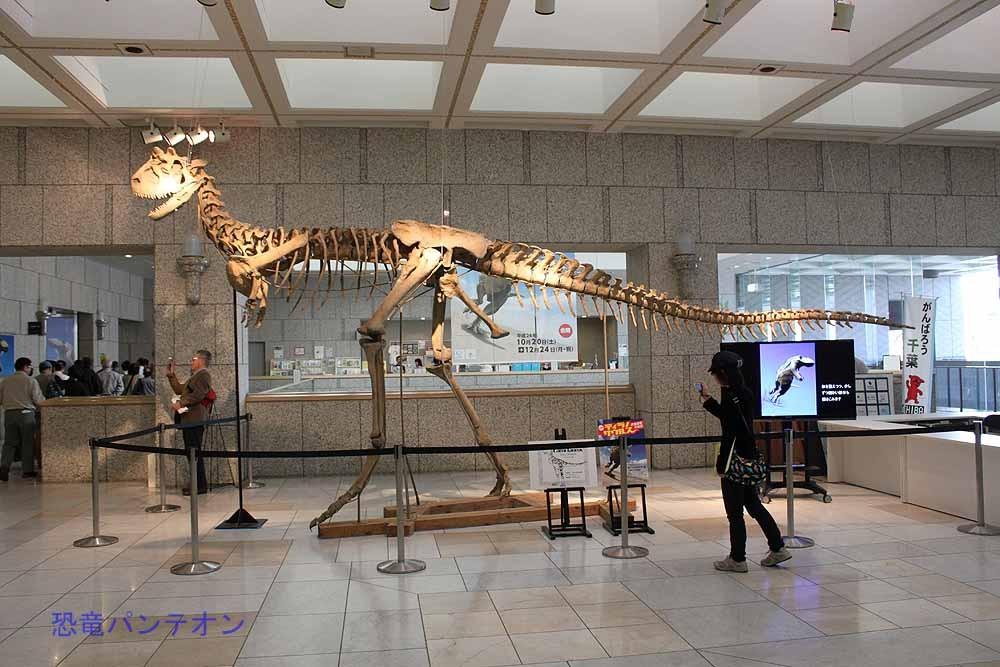 カルノタウルス骨格。前肢もつきました。