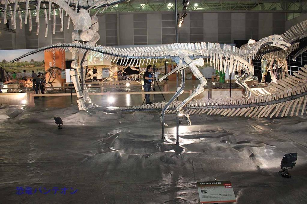 ズケンゴサウルス幼体骨格。全長6m。生後2年程度だろうということです。