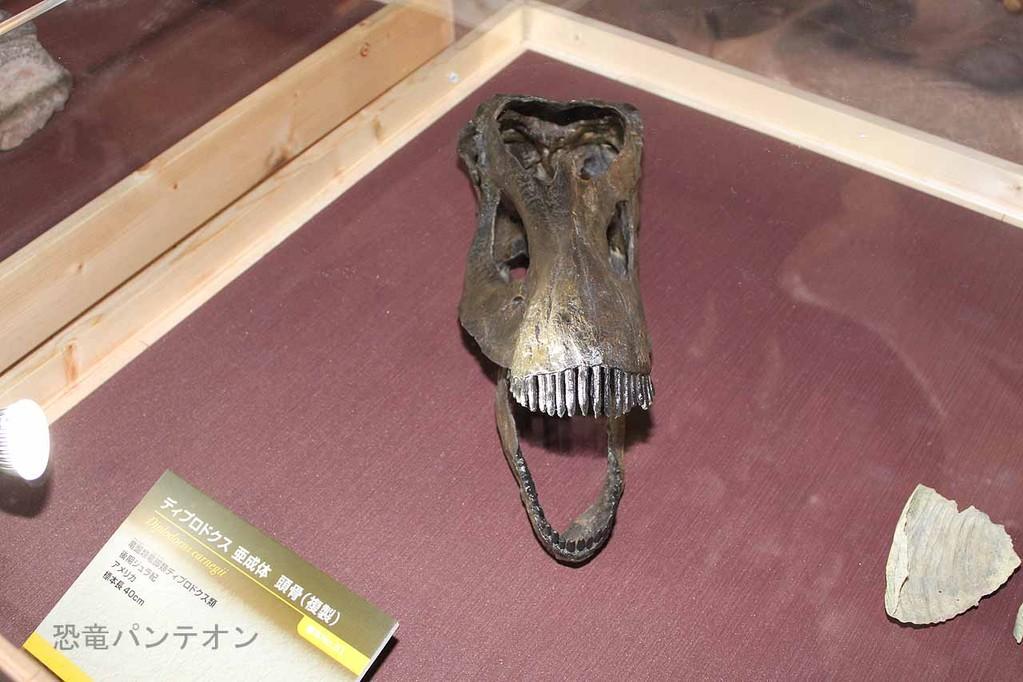 ディプロドクス亜成体頭骨
