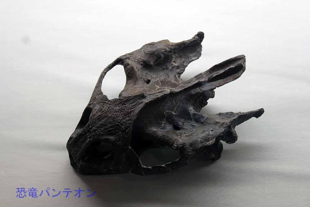 カメの仲間頭骨