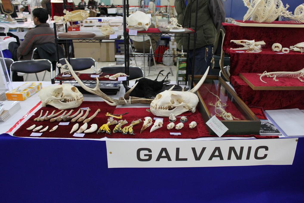 GALVANIC 骨好きにはたまらい店です。