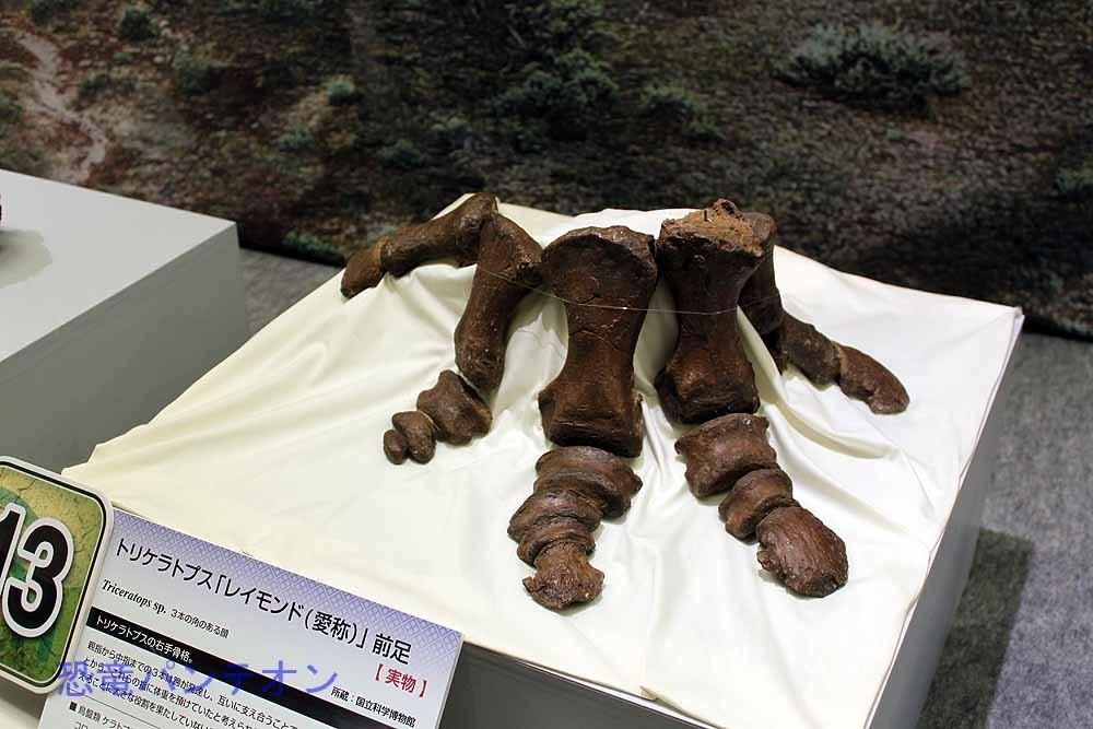 トリケラトプス「レイモンド」前足
