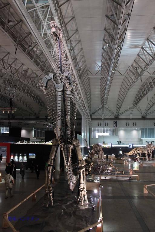 フアシアオサウルス