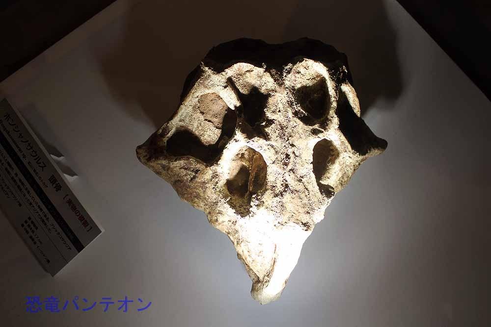 これもアジアの基盤的ケラトプシア類、ホンシャノサウルス Hongshanosaurus。この学名で展示されているということは、まだ有効名なのでしょうか。