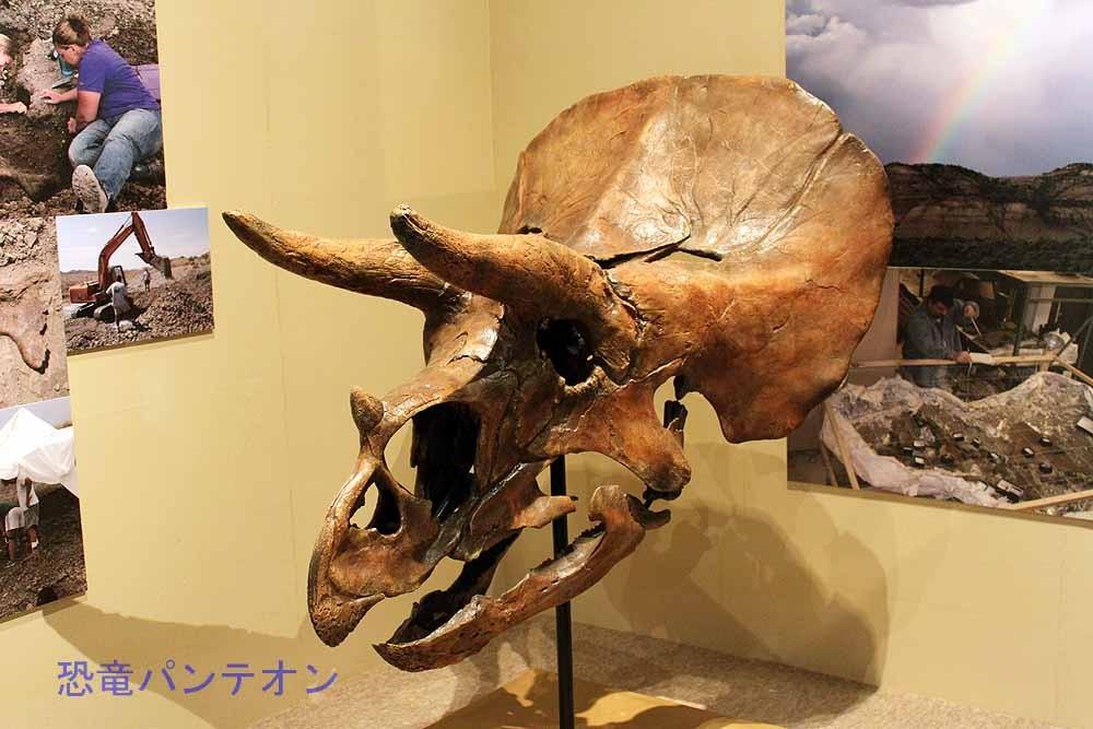 トリケラトプス「ホーマー」モンタナ州ヘルクリーク層のホーマーサイトで発掘されました