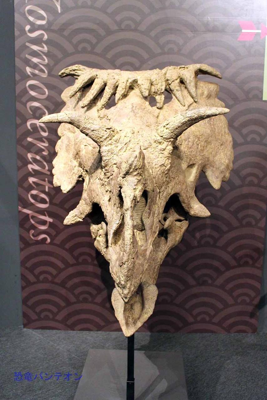 コスモケラトプス Kosmoceratops ユタ州で発見されたカスモサウルス亜科。