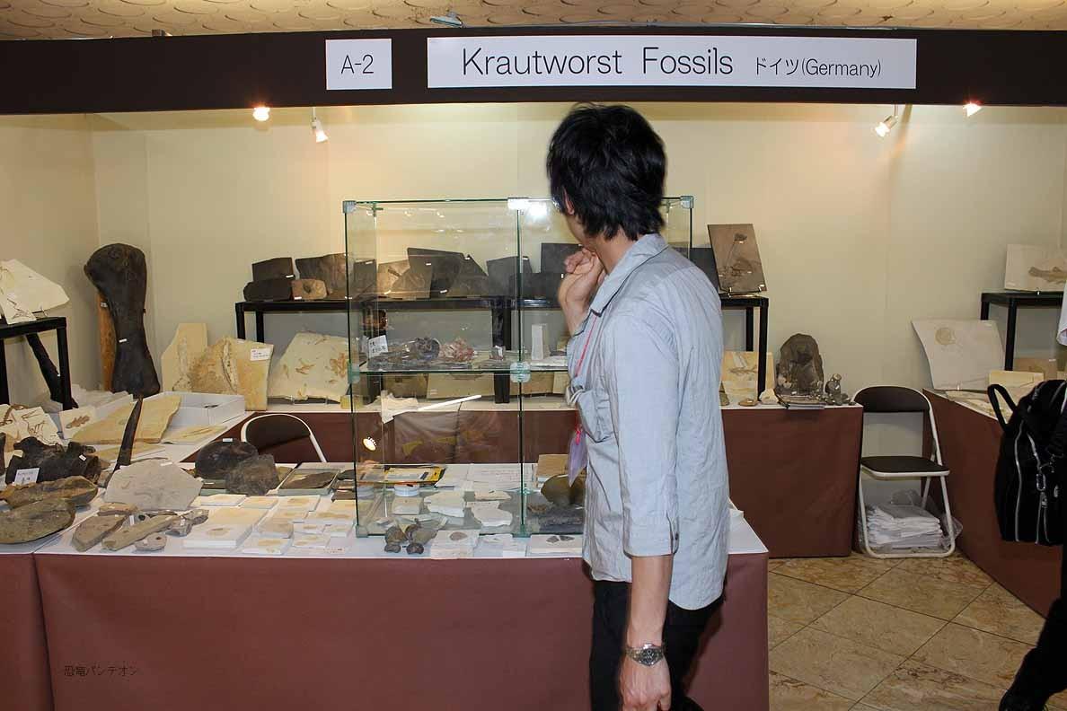 Krautworst Fossils A-2 ドイツのお店です。化石好きにとって、ここも定番。