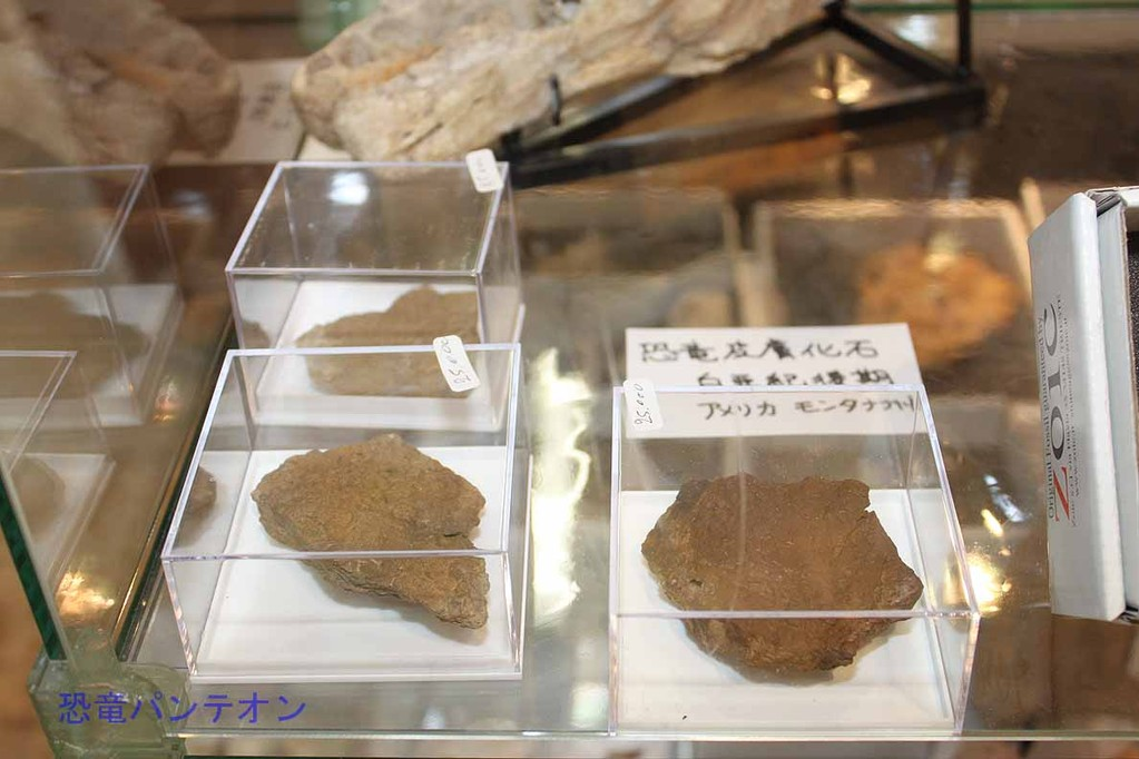 Zoic Sri 恐竜皮膚化石 アメリカ モンタナ州