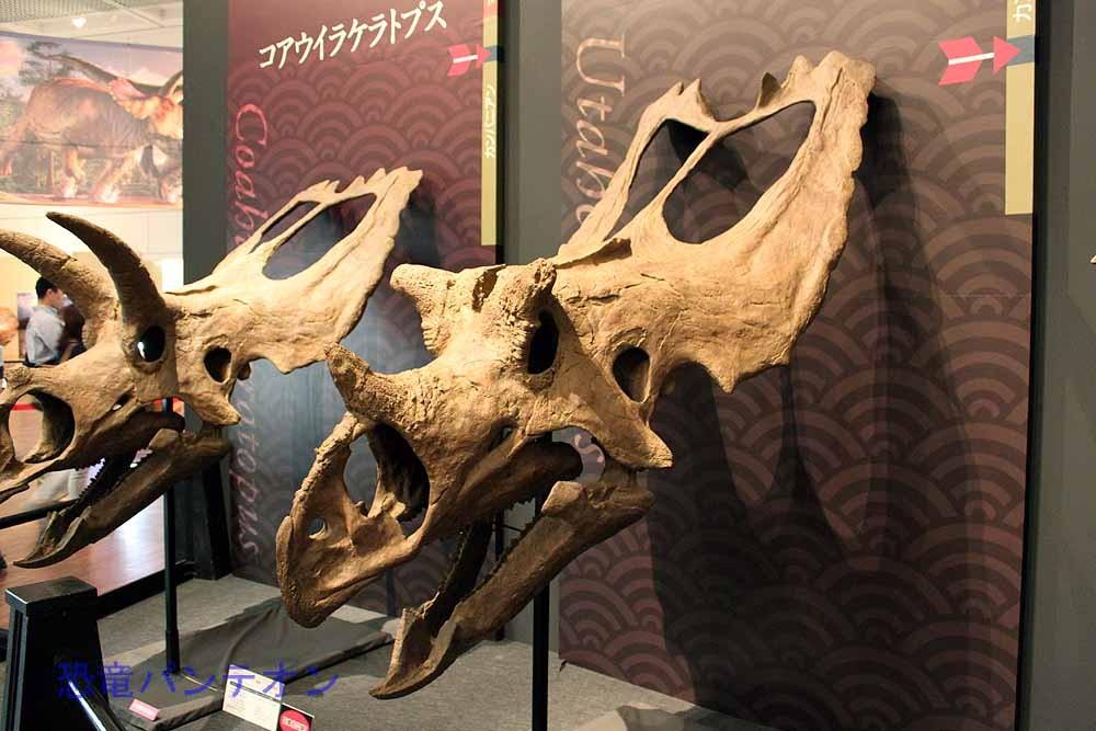ユタケラトプス Utahceratops