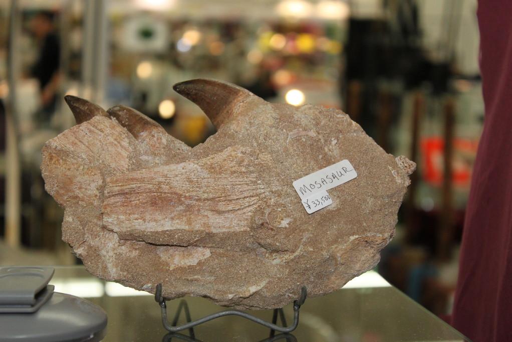 Sahara sea Collection-Doc Fossil モササウルスの顎でしょうか。33,500円